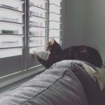 Shutters are purrfect for the whole family, even the pets!